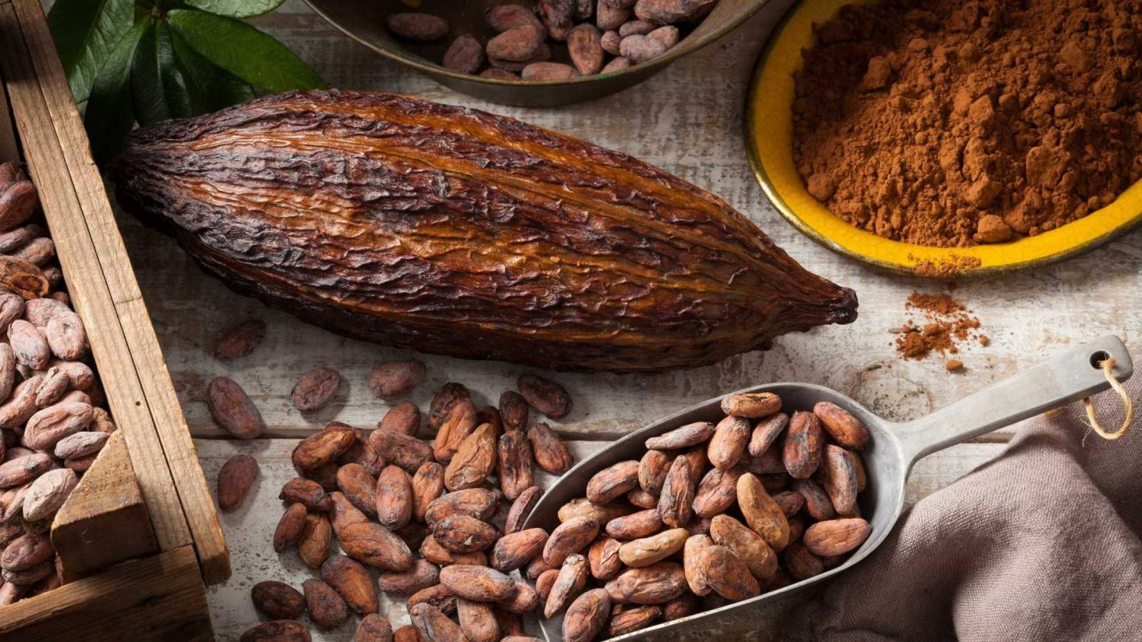 Cacau e Chocolate - Conheça os benefícios e, como e quanto consumir.
